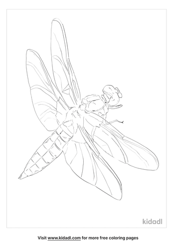 black-tailed-skimmer-coloring-page