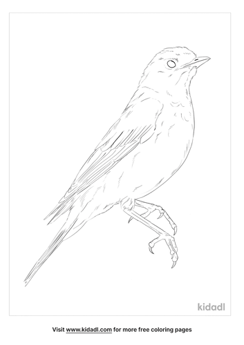 black-throated-thrush-coloring-page