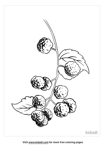 blackberry coloring page_3_lg.png