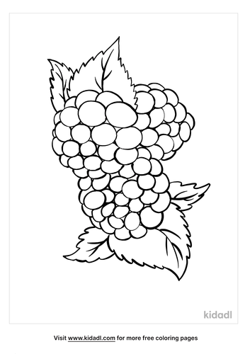 blackberry coloring page_5_lg.png