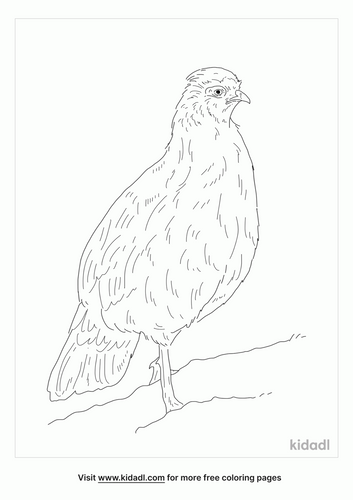 blood-pheasant-coloring-page