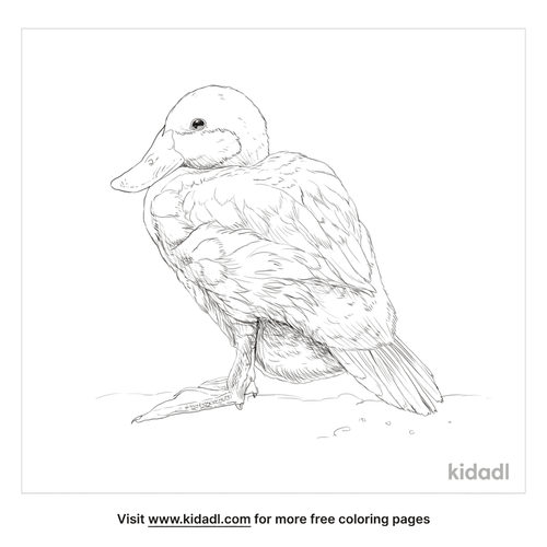 blue-billed-duck-coloring-page