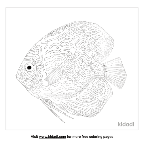 blue-discus-coloring-page