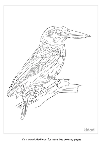 blue-eared-kingfisher-coloring-page