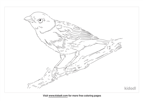 blue-gray-tanager-coloring-page