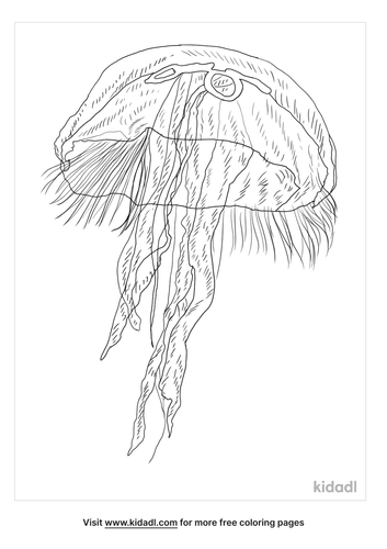 blue-jellyfish-coloring-page
