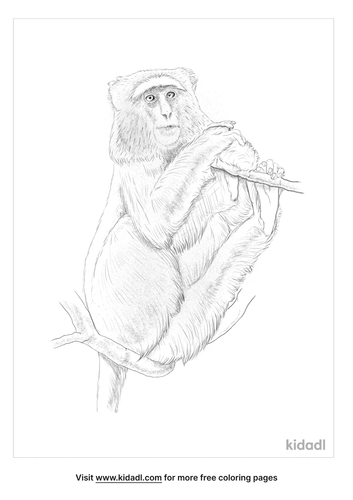 blue-monkey-coloring-page
