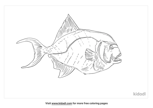 blue-triggerfish-coloring-page