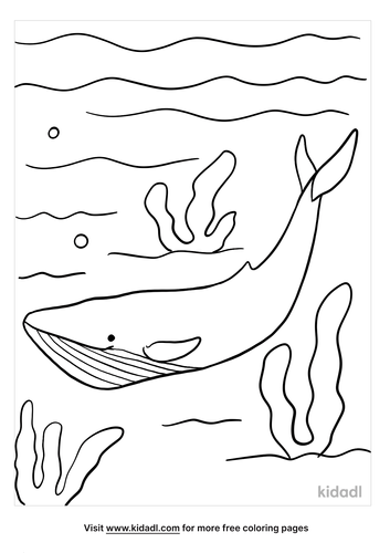 blue whale coloring page-2-lg.png