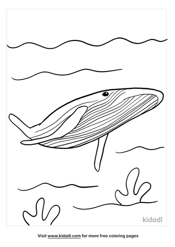 blue whale coloring page-4-lg.png