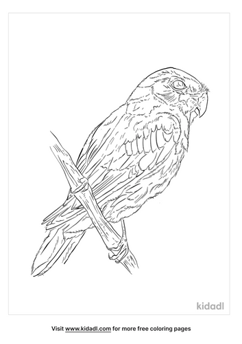 blue-winged-parrotlet-coloring-page