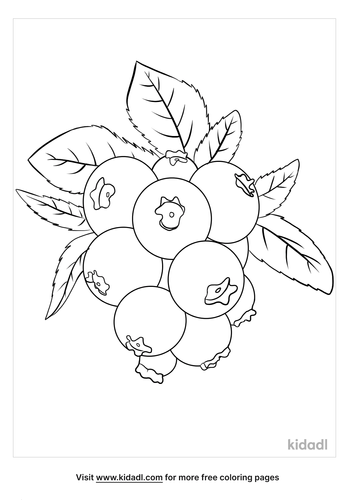 blueberries coloring page-2-lg.png