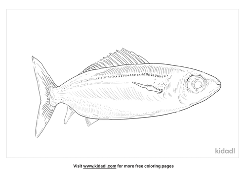 boops-boops-fish-coloring-page