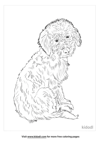 bordoodle-coloring-page