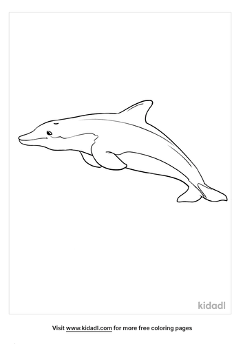 bottlenose dolphin coloring page_3_LG.png