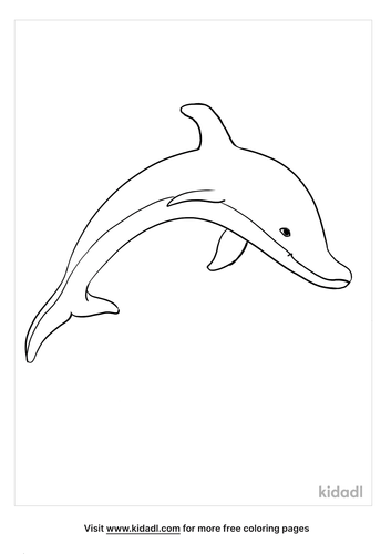 bottlenose dolphin coloring page_5_LG.png