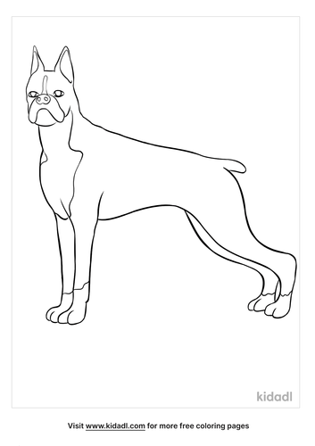 boxer coloring page-3-lg.png