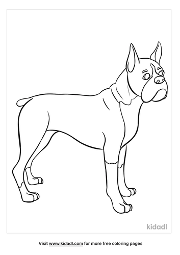 boxer coloring page-5-lg.png