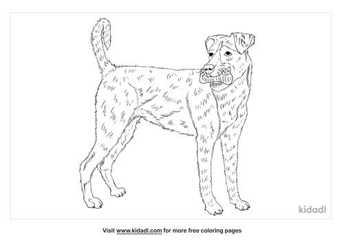 boxer-lab-mix-coloring-page