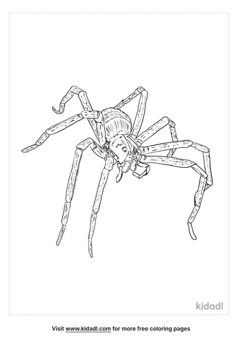 brazilian-wandering-spider-coloring-page