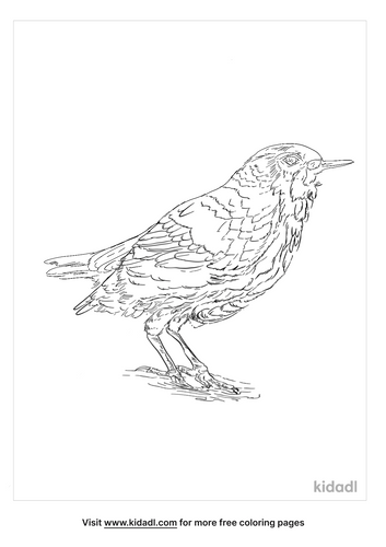 brown-dipper-coloring-page
