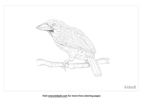 brown-headed-barbet-coloring-page
