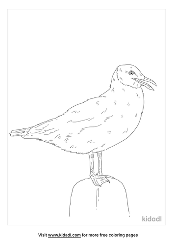 brown-headed-gull-coloring-page