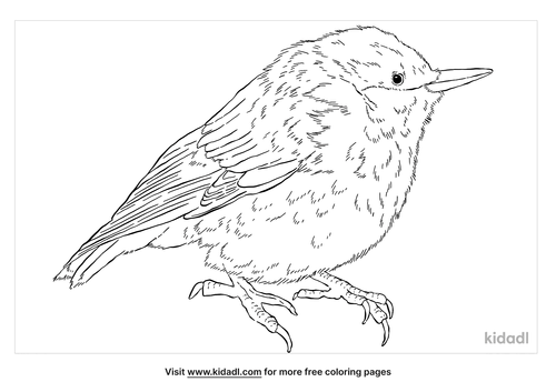 brown-headed-nuthatch-coloring-page