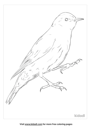 brown-treecreeper-coloring-page