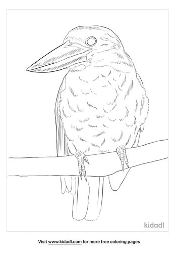 brown-winged-kingfisher-coloring-page