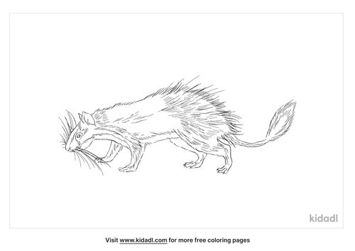 brush-tailed-porcupine-coloring-page