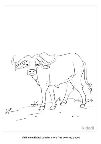 buffalo coloring page_3_lg.png