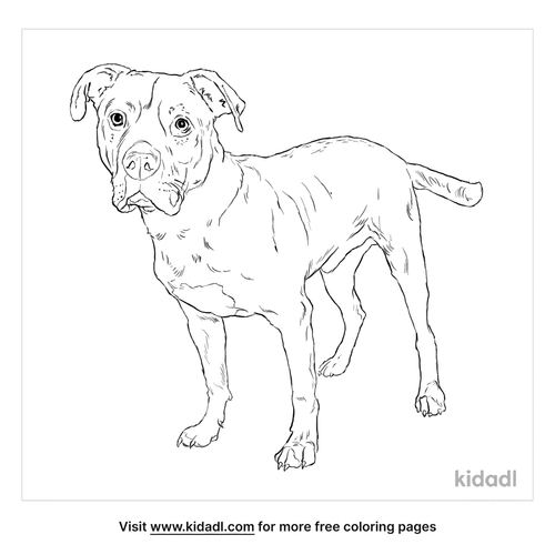 bullboxer-pit-coloring-page