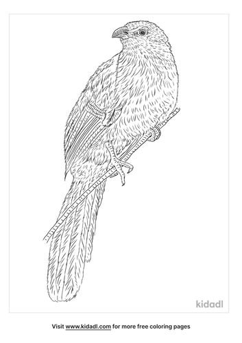 burchells-coucal-coloring-page