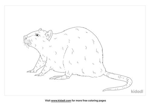 burmese-rat-coloring-page