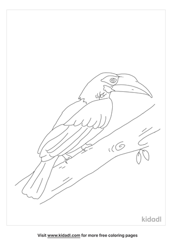 bushy-crested-hornbill-coloring-page.png