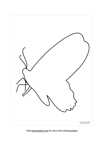 butterfly outline-4-lg.png