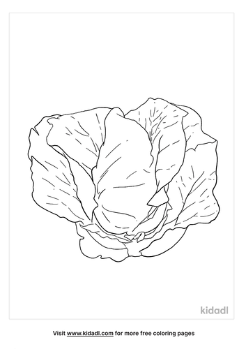 cabbage coloring page_3_lg.png