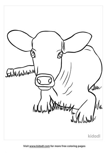 calf coloring page-2-lg.png
