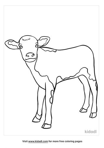 calf coloring page-3-lg.png