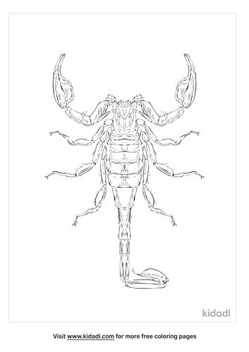 california-common-scorpion-coloring-page