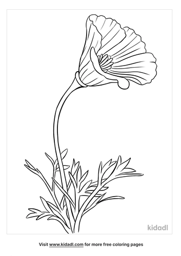 california poppy coloring page-2-lg.png