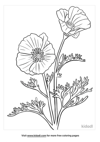 california poppy coloring page-3-lg.png