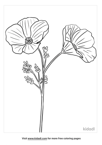california poppy coloring page-4-lg.png