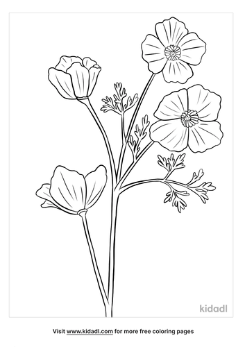 california poppy coloring page-5-lg.png