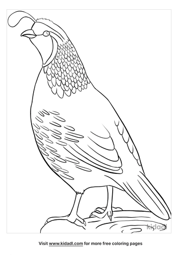 california state bird coloring page-3-lg.png