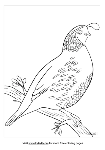 california state bird coloring page-4-lg.png