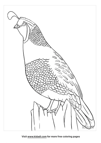 california state bird coloring page-5-lg.png