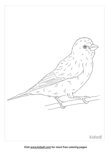 cape-canary-coloring-page