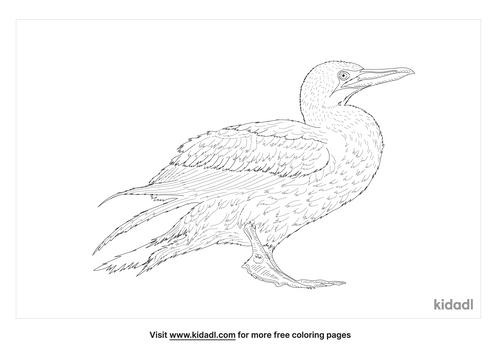 cape-gannet-coloring-page